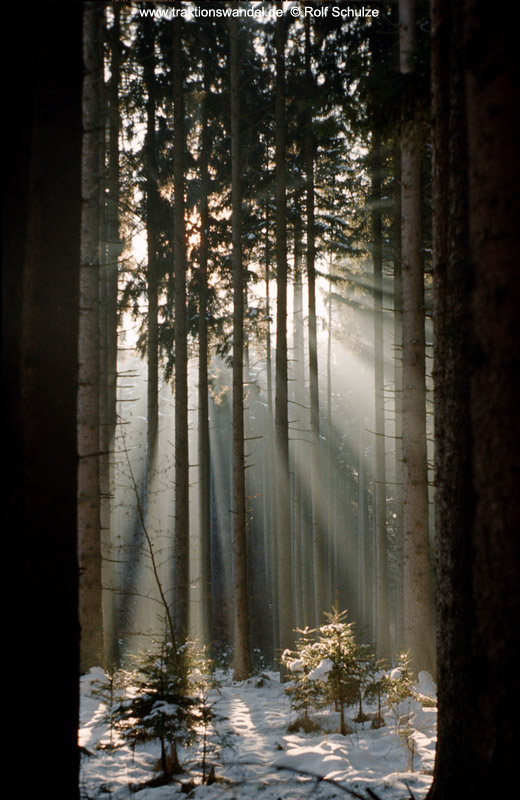http://www.traktionswandel.de/pics/foren/hifo/1975-12-28_E19-09_Allgaeu_Sonnenstrahlen-im-Wald_520.jpg